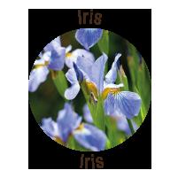 loghetto-iris